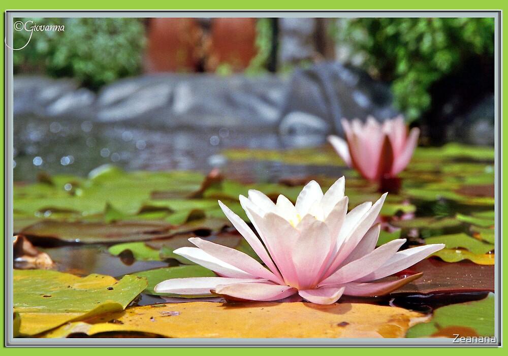 Floating Bliss by Zeanana