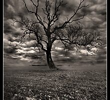 The Tree On Roxby Bends by Alex Worsley