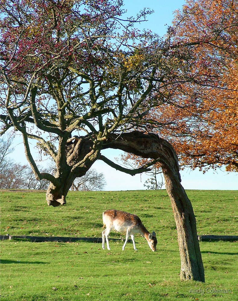 Deer in Knole Park by Andy Coleman