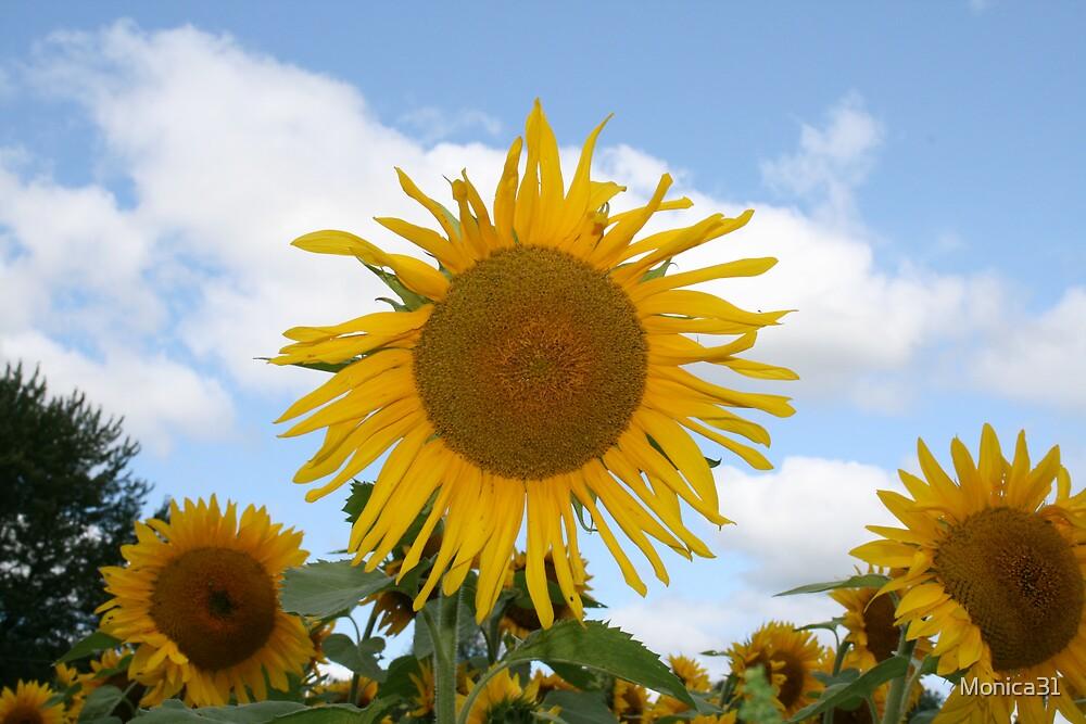 Sunflower Garden by Monica31