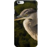 Focused Hunter - a Great Blue Heron Watching for Fish iPhone Case/Skin
