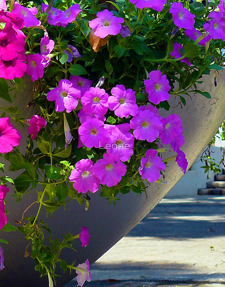a display of petunia's by Leone Fabre