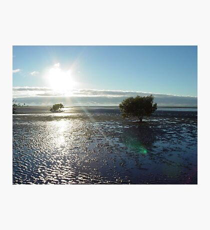 Lone tree on tidal flat Photographic Print