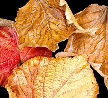 Autumn Leaves I by gypsygirl