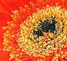 Flowerburst by Robyn Lakeman