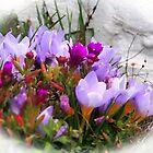 Bright Spring Flowers....Dorset UK by lynn carter