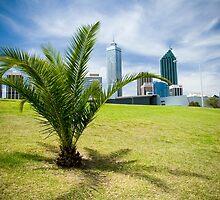 Palm Tree, Perth by hzopak