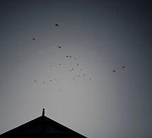 Queenscliff Cormorants by Marcel Lee