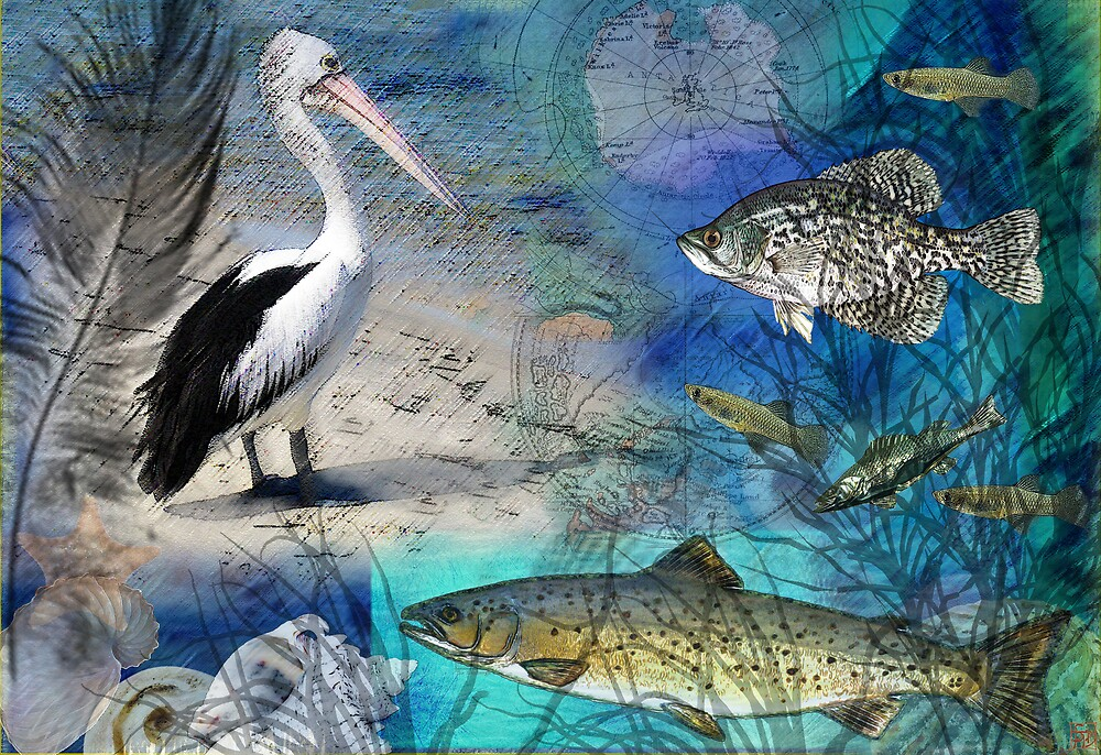 Pelican Dreaming by Sabine Spiesser