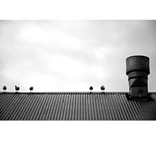 Birds on a roof Photographic Print