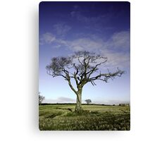 The Rihanna Tree Wilting Canvas Print