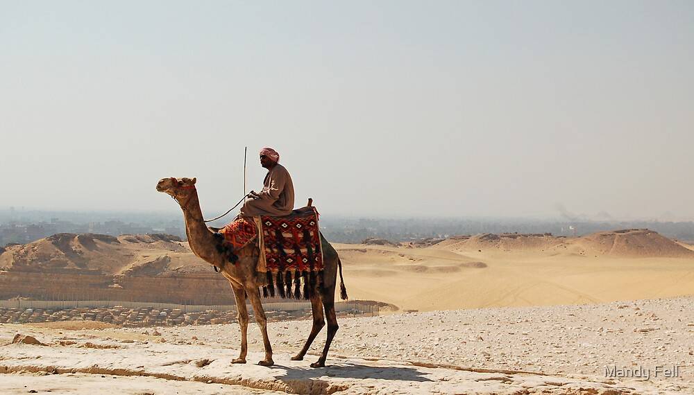 Camel overlooking Cairo by Mandy Fell