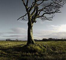 The Rihanna Tree, Singing by Wrayzo