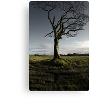 Rihanna Tree, Singing Canvas Print
