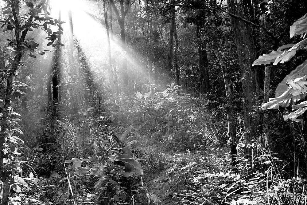 Ray of light by Stuart Innes