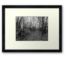 Mountain Ash Trees in the Mist Framed Print