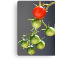 Red against green Canvas Print