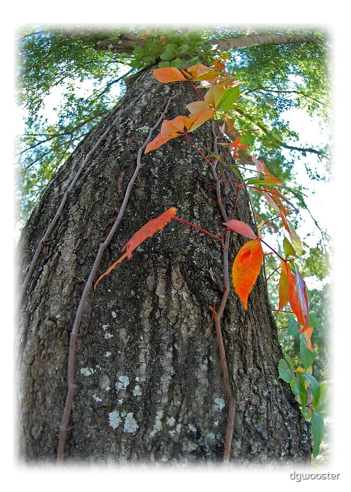 Oak Tree in Fall by dgwooster