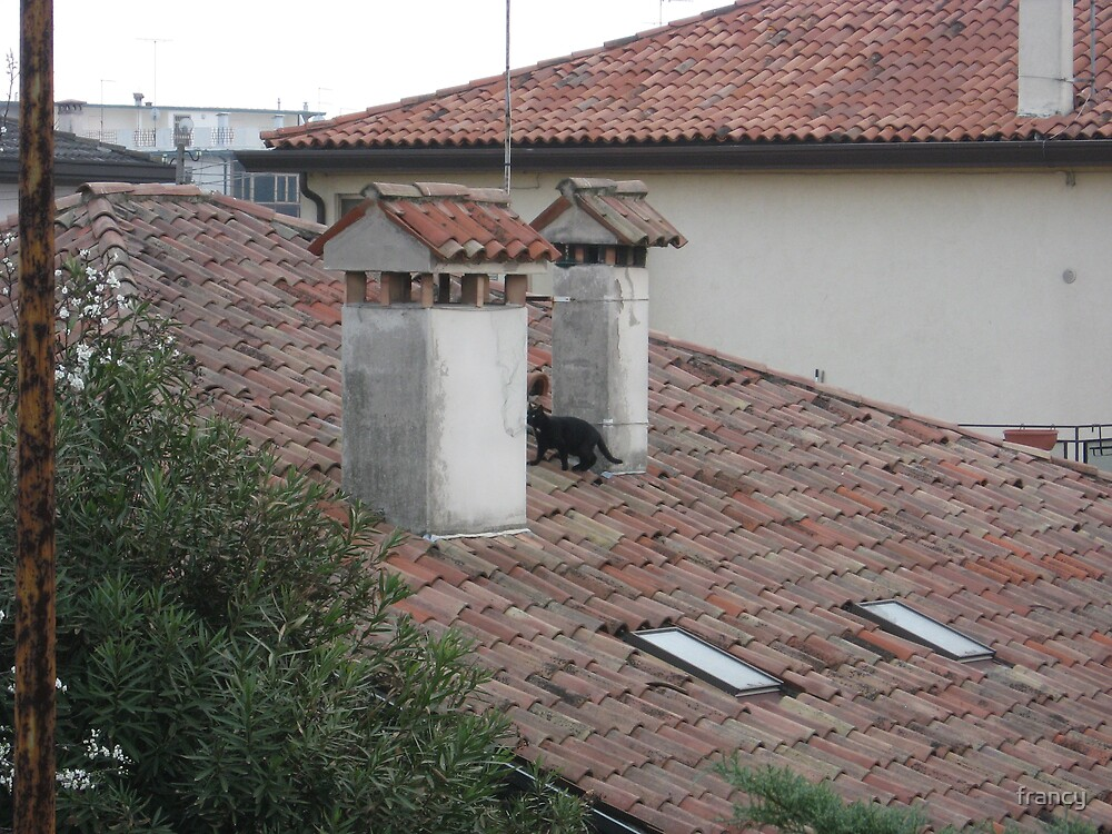 the black cat  on the roof by francy