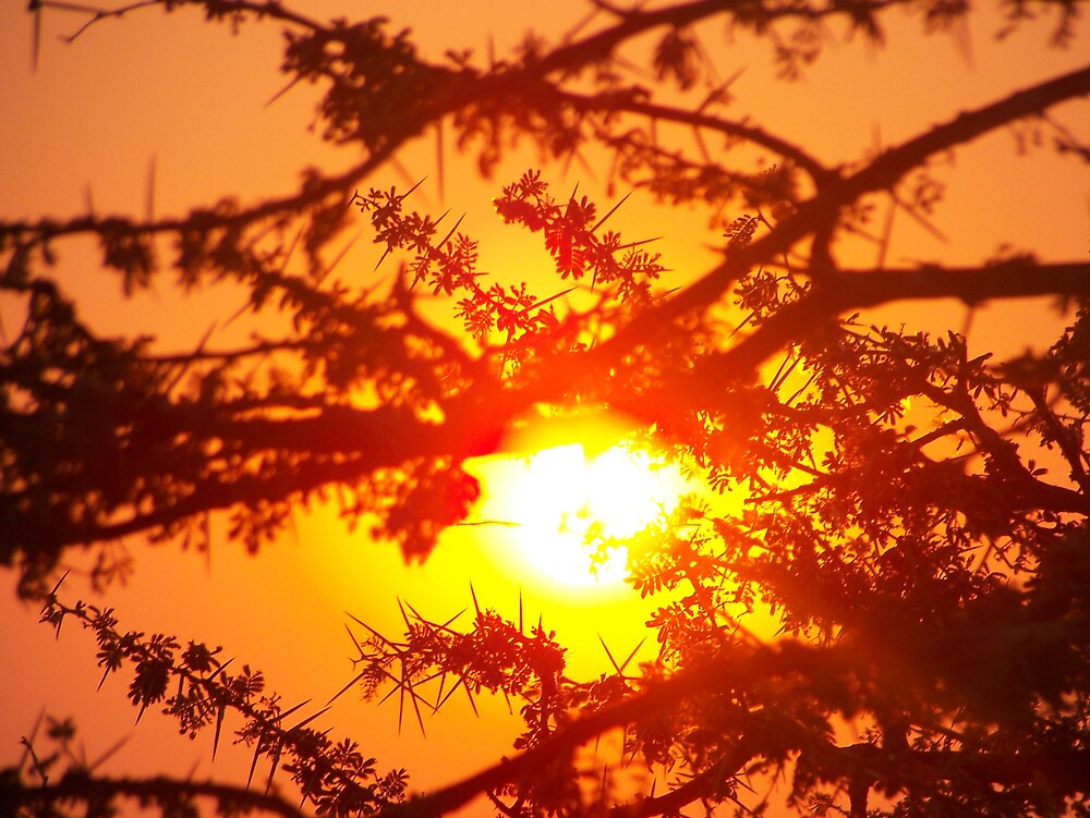 Sunset behind a tree by tj107