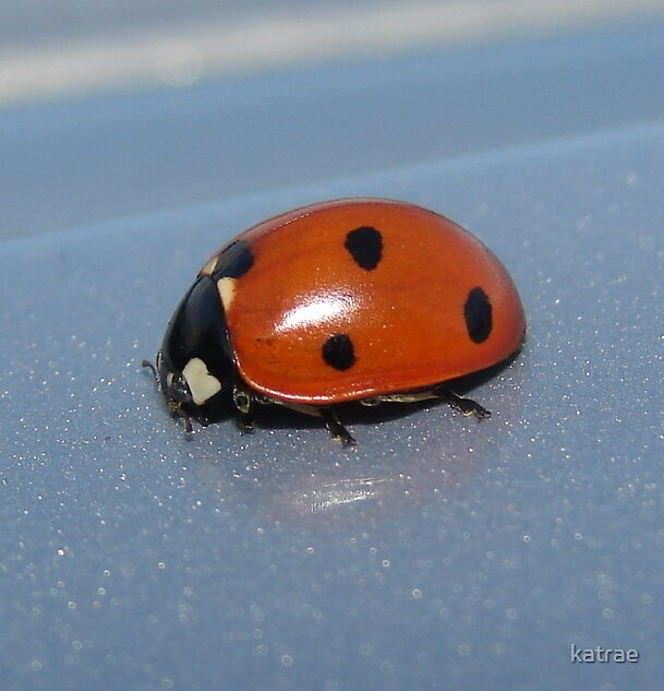 Little Ladybug Lost by katrae