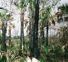 Everglades lives on by Amber Finan