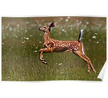 Summer Fawn - White-tailed Deer Poster