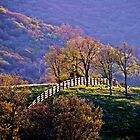 Fence On Hill by Rany Lutz