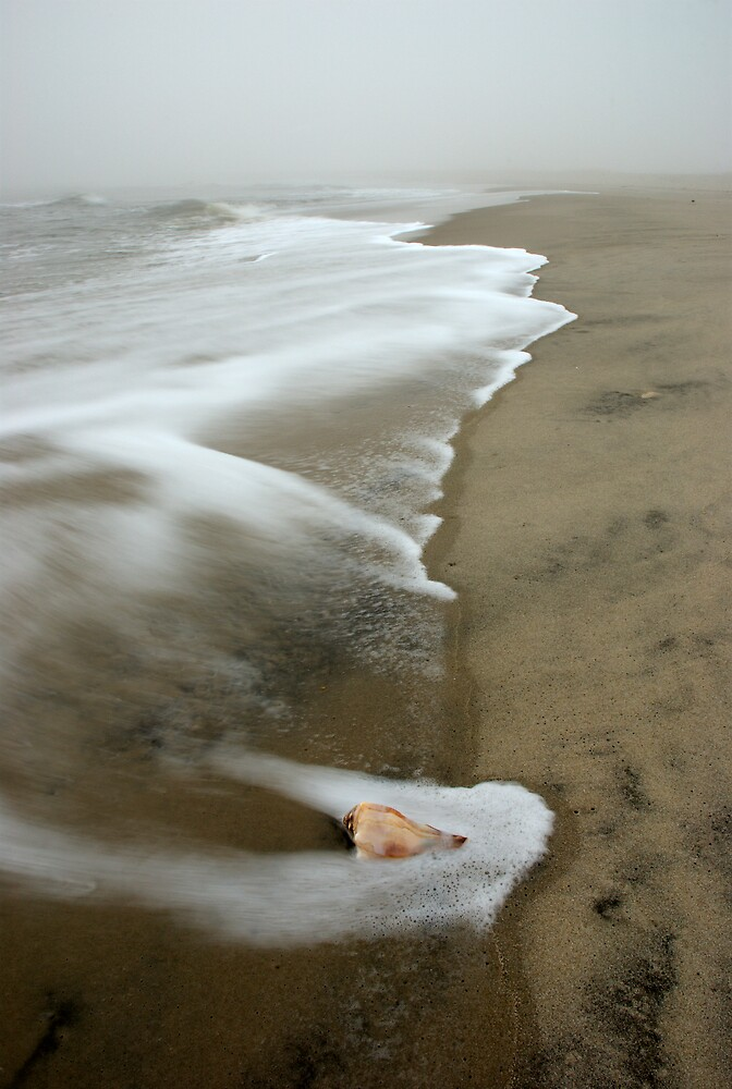 Seashell by jayobrien