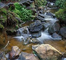 Woodland Stream by Rob Lavoie