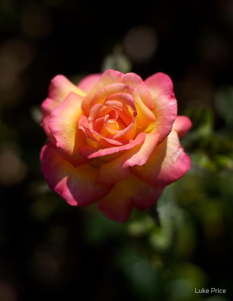 Une Belle Rose by Luke Price