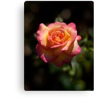 Une Belle Rose Canvas Print