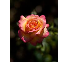Une Belle Rose Photographic Print