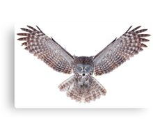 Great Grey Owl - Power Canvas Print