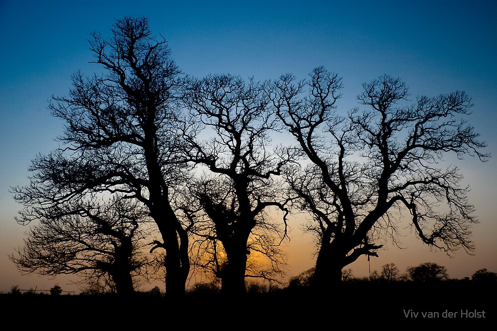 Tree silhouette by Viv van der Holst