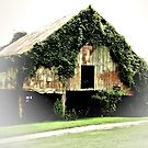 """""""Chia Barn""""... prints and products by © Bob Hall"""