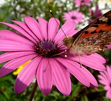 Butterfly on Flower by migueldelmonte