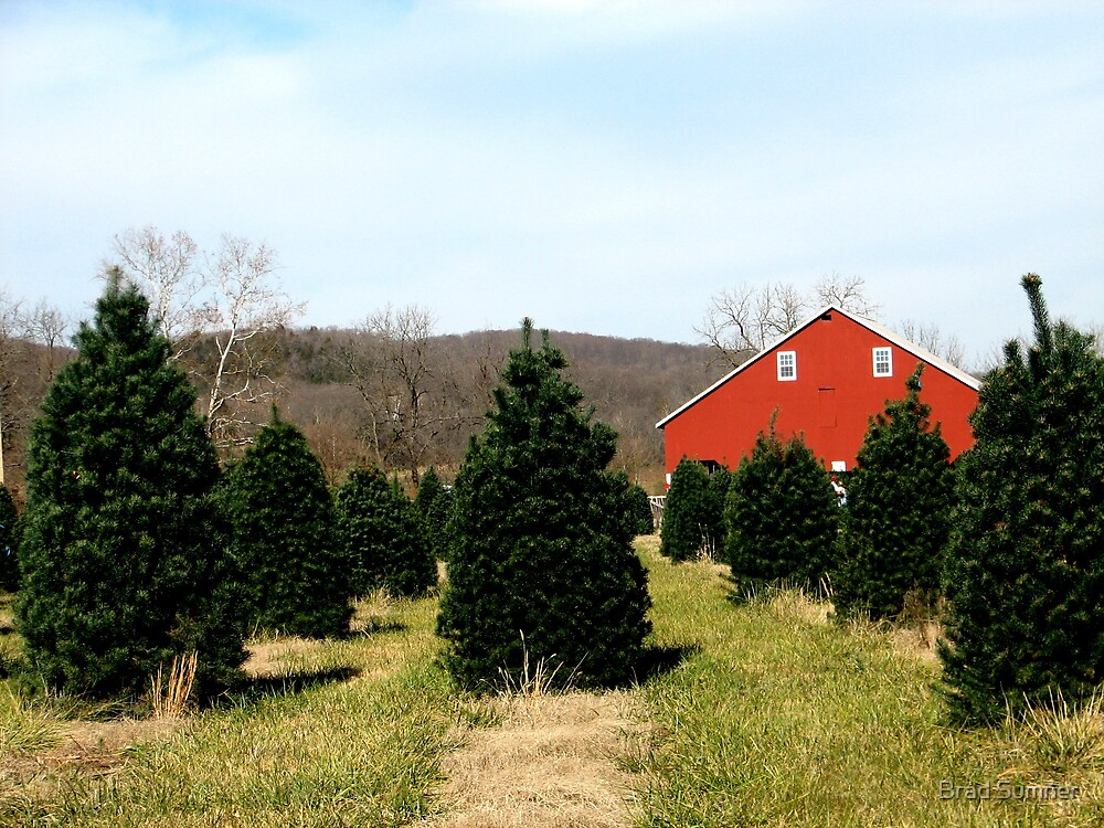 Christmas Tree Farm by Brad Sumner