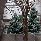 Condo's First 2014 Snow.. by Larry Llewellyn
