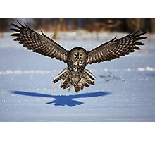 In your face - Great Grey Owl Photographic Print