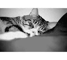 Sleeping Joey Photographic Print