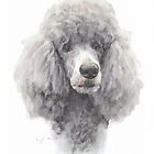 Gray standard poodle by Mike Theuer