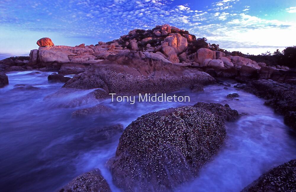 oyster rock by Tony Middleton