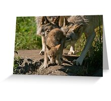 Timber Wolves And Pup Greeting Card