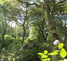 Abbotsbury Sub Tropical Gardens by Frances Knight