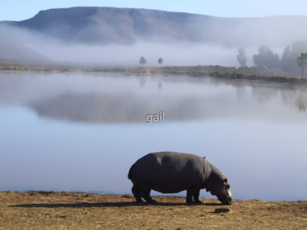 Hippo in the mist.. by gail