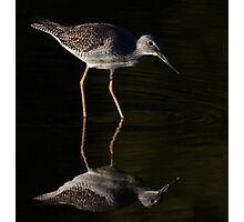 Greater Yellowlegs Reflects Photographic Print