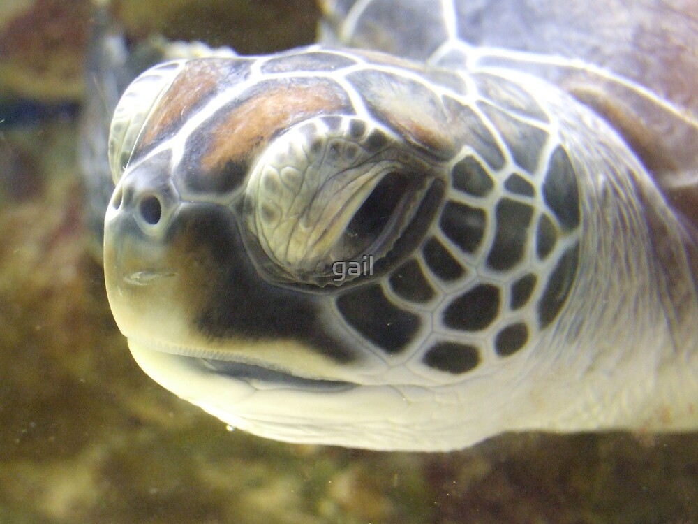 turtle by gail