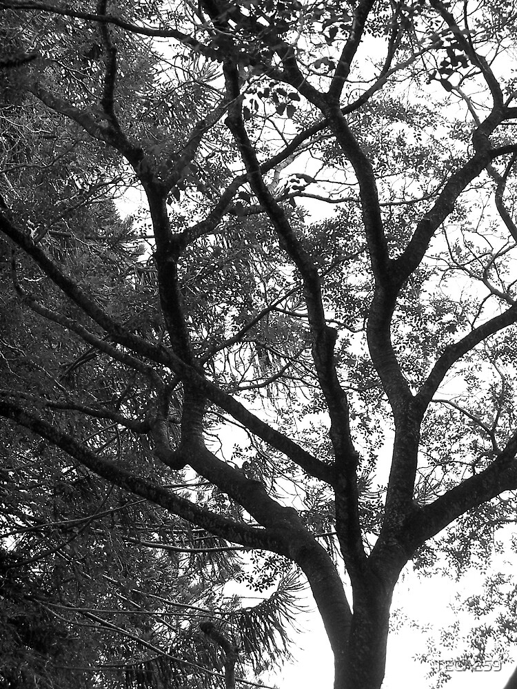 Black and white tree by TECA259