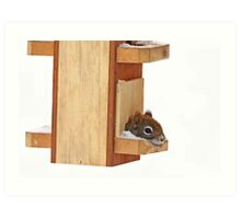 Anyplace is home when it's cold - Red Squirrel Art Print